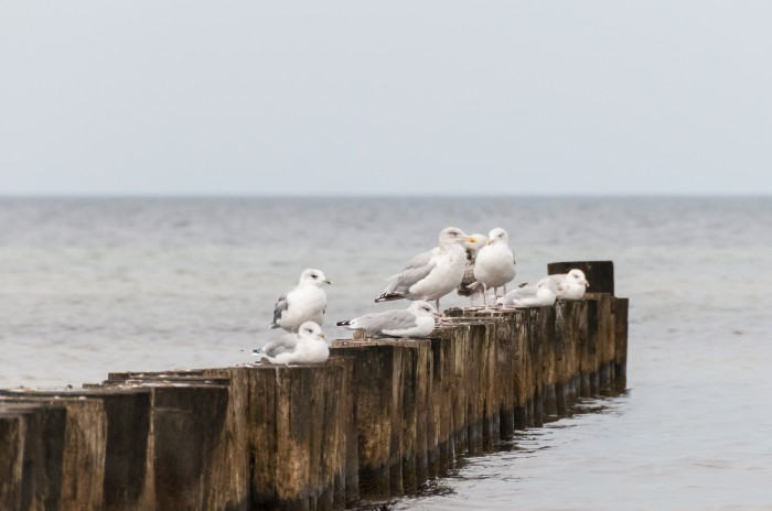 Seagulls waiting for the sun (or some food to swim by)