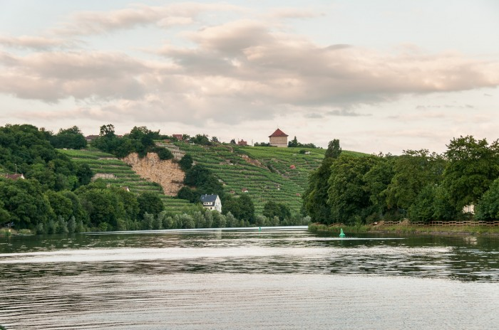 Vineyards at river Neckar near Stuttgart.