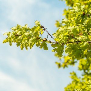 Visiting an Oak Tree