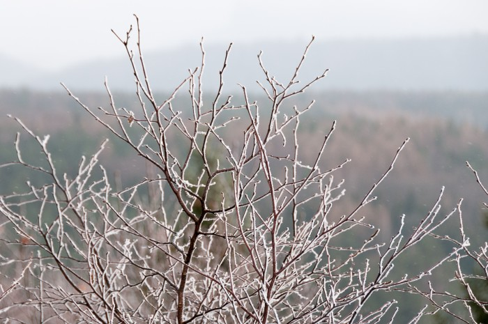 branches with icy cover